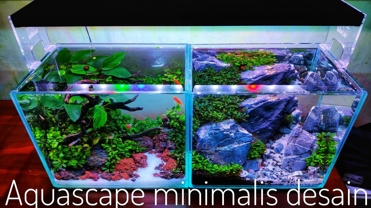 102 Membuat Aquascape Ukuran 30cm Youtube