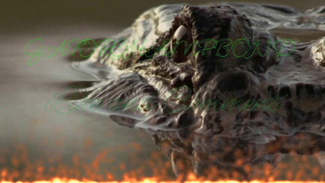 Днем, крокодил гифка прикол