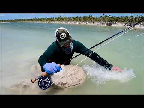 Fly Fishing For Jack Crevalle  In Small Channels Of Ascension Bay
