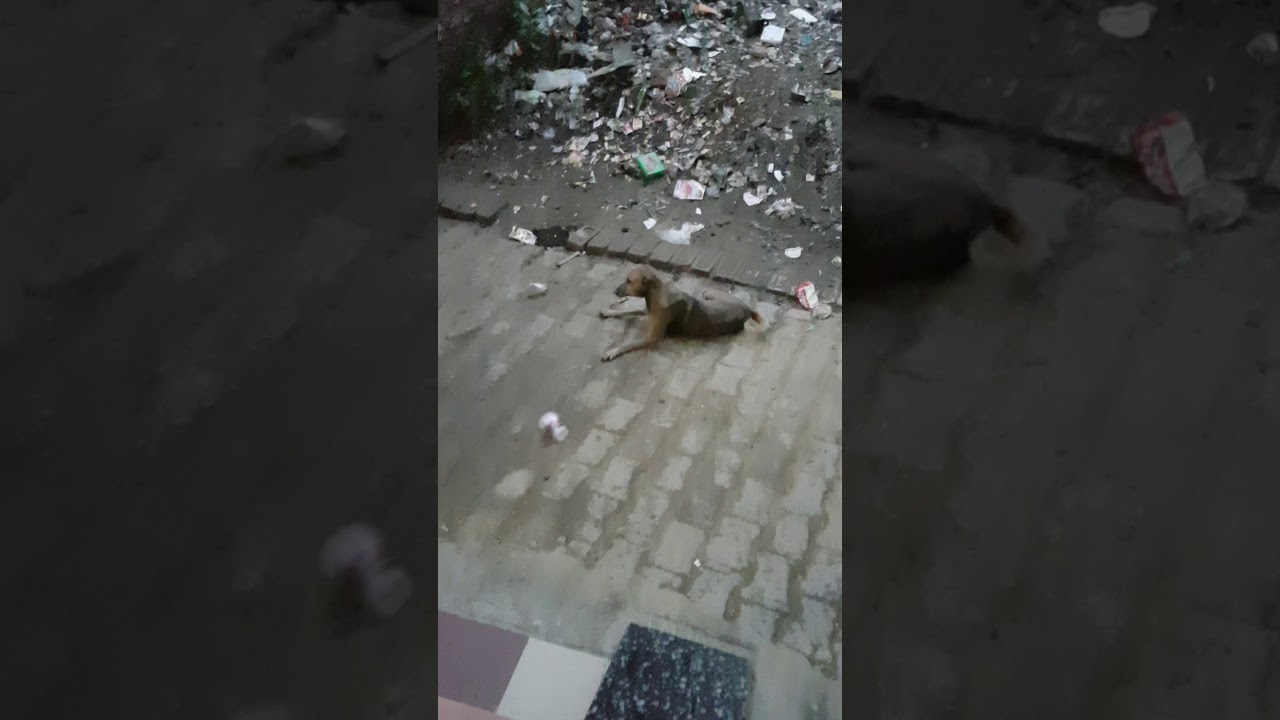 The funny dog