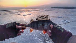 Редко но метко Зимняя рыбалка на окуня и судака Ловля окуня на балансир
