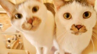 4匹1列で飼い主さんの帰宅を出迎える猫がかわいすぎる