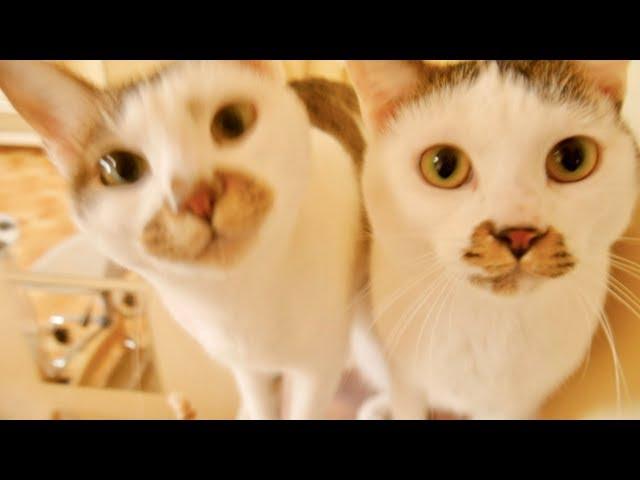 我が家の猫たちのお出迎え方法