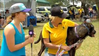 Totally Wild - Beagle Club Of Qld Lure Coursing Day