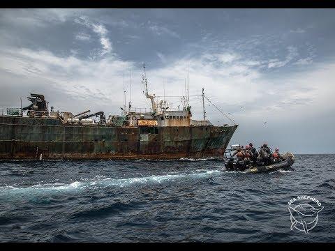 SEA SHEPHERD CONTINUE A SAUVER DES VIES AU GABON - SUCCÈS DE L'OPÉRATION ALBACORE 3