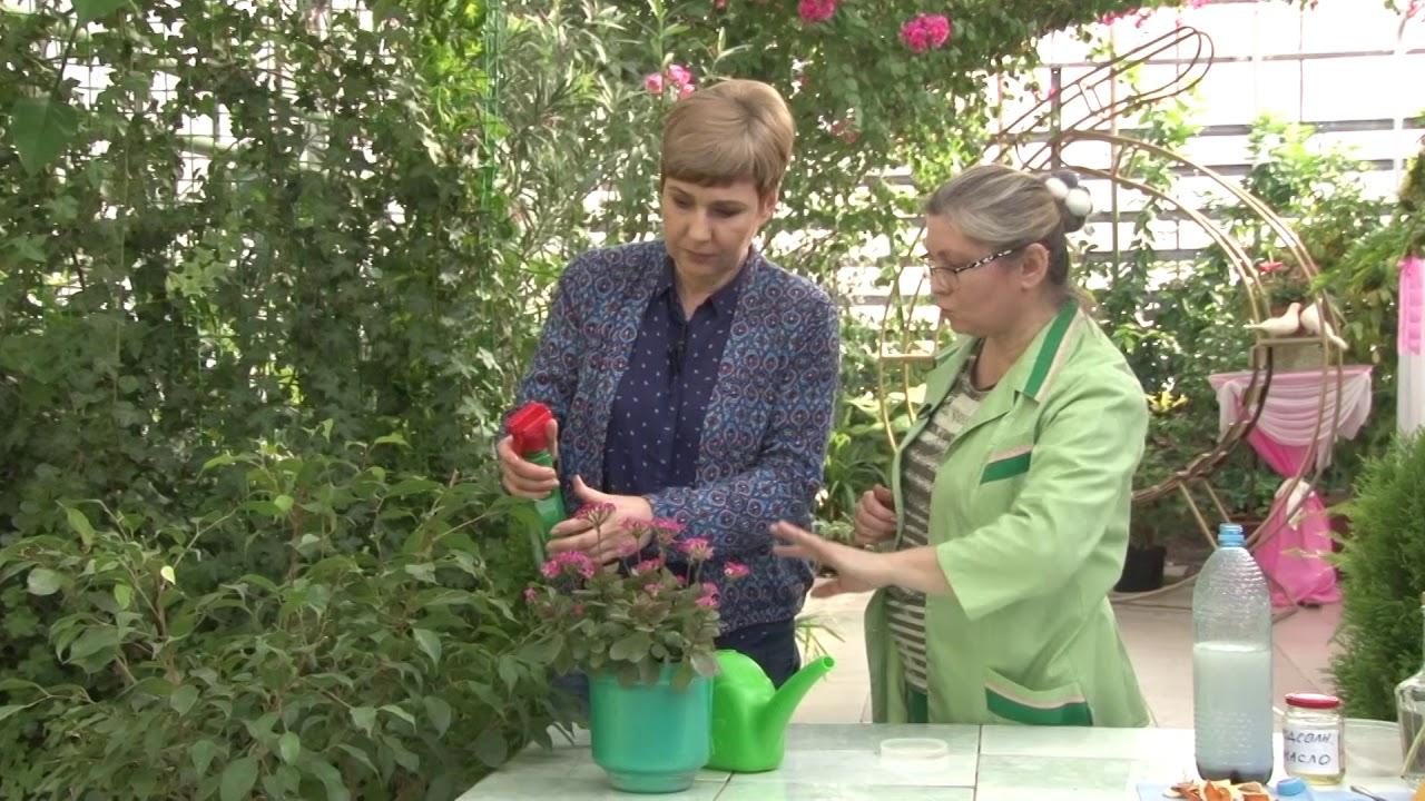 Борьба с вредителями растений народными средствами