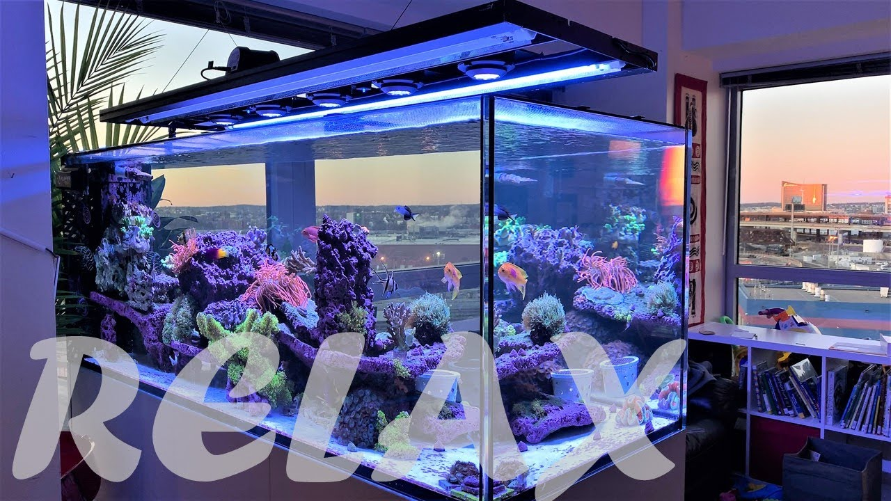 Relaxing Saltwater Aquarium Video with Music (Red Sea 650)