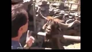 Веселый и смешной прикол в зоопарке!