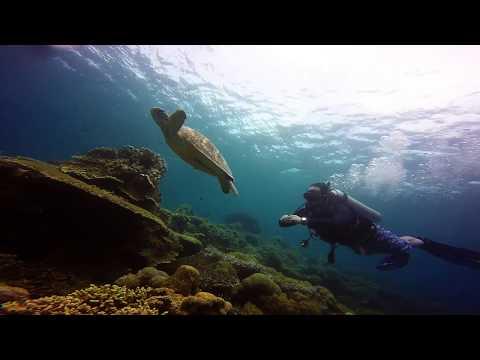 Balicasag Marine Sanctuary Panglao Bohol