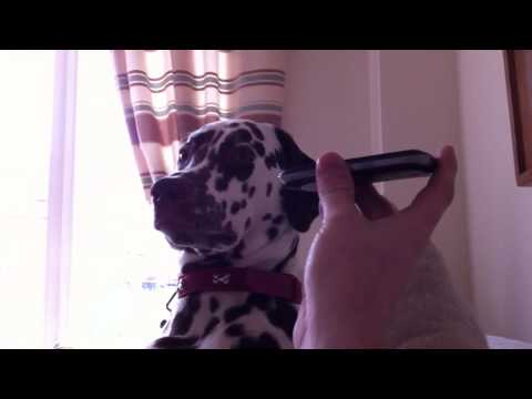 Dog on hold with Tax Office