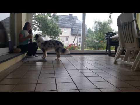 Anleitung : Hund lernt apportieren und an einen Ort bringen / in die Hand geben