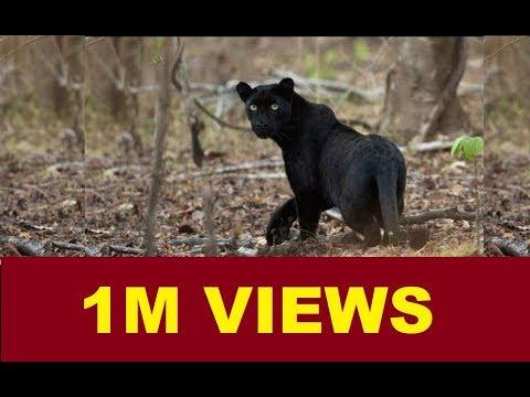 മുതുമല കാട്ടിലെ മൃഗങ്ങള് ഗംഭീര കാഴ്ച | MUDUMALAI NATIONAL PARK ANIMALS | FULL VIDEO