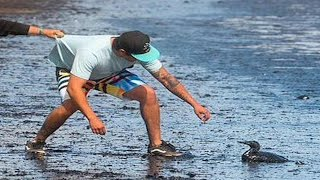 Oil Spill Causes Extensive Damage In Rich LA Beach Community
