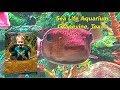 Sea Life Aquarium Visit Grapevine, Texas
