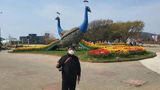 210420 태안 튤립 꽃 박람회