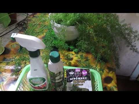 """Эффективные средства- """" палочки-выручалочки """"для растений! Новости об аспарагусе.из YouTube · С высокой четкостью · Длительность: 6 мин53 с  · Просмотров: 183 · отправлено: 29.08.2017 · кем отправлено: Ната и мои любимые растения"""