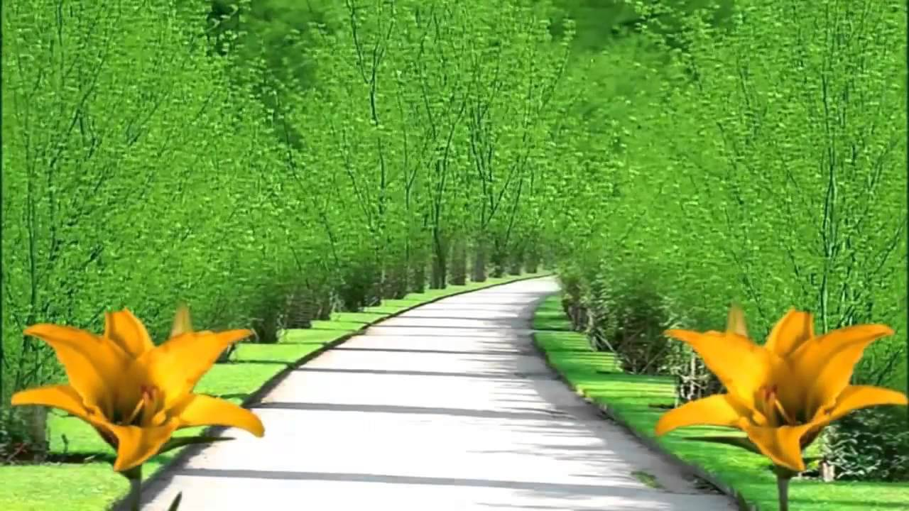 nature hd background 1280x720 - youtube