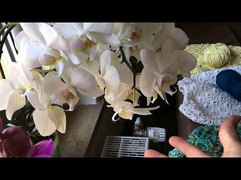 орхидея розовая знакомства