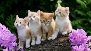 Рыжие котята с цветами