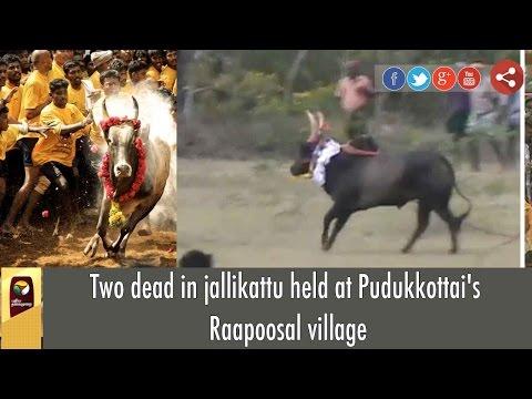 Jallikattu: 2 dead in Pudukkottai