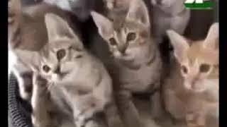 kucing kucing lucu
