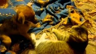 спарринг кошки и собаки