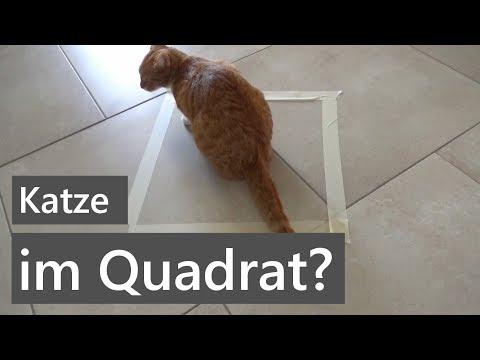 Wieso Setzen Sich Katzen In Vierecke? | Wissen | Unsere Kleine Katze Charlie