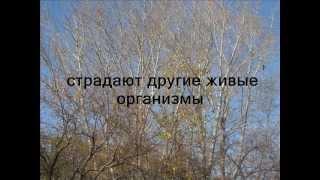 Экозрение.wmv(Представленное видео