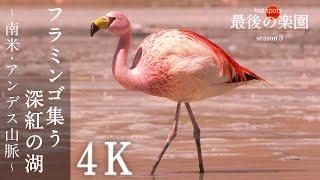 [NHKスペシャル] 4K フラミンゴ集う深紅の湖~南米・アンデス山脈~ | ホットスポット 最後の楽園 season3 第2回 | NHK