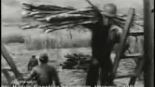 la historia afro mexicana