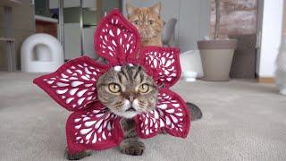 진짜-기묘한-고양이