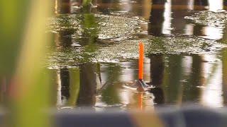 Рыбалка на вечерней зорьке на поплавок Ловля на маховую удочку