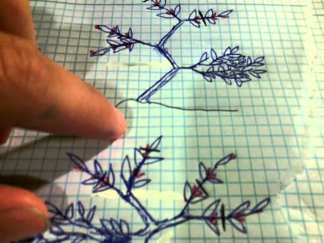 Como hacer  un moyogi