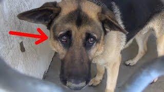 Старенький пес прощался с жизнью, когда его выводили из вольера, но потом он увидел, куда его ведут