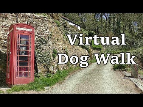 Relaxing TV for Dogs - Virtual Dog Walk with Gentle Music ✅