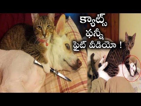 Funny Cats Video | Cats Fighting | Funny Cats Viral Video | Cats And Dogs Fight