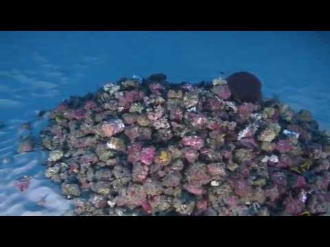 First-ever underwater images of the Amazon reef