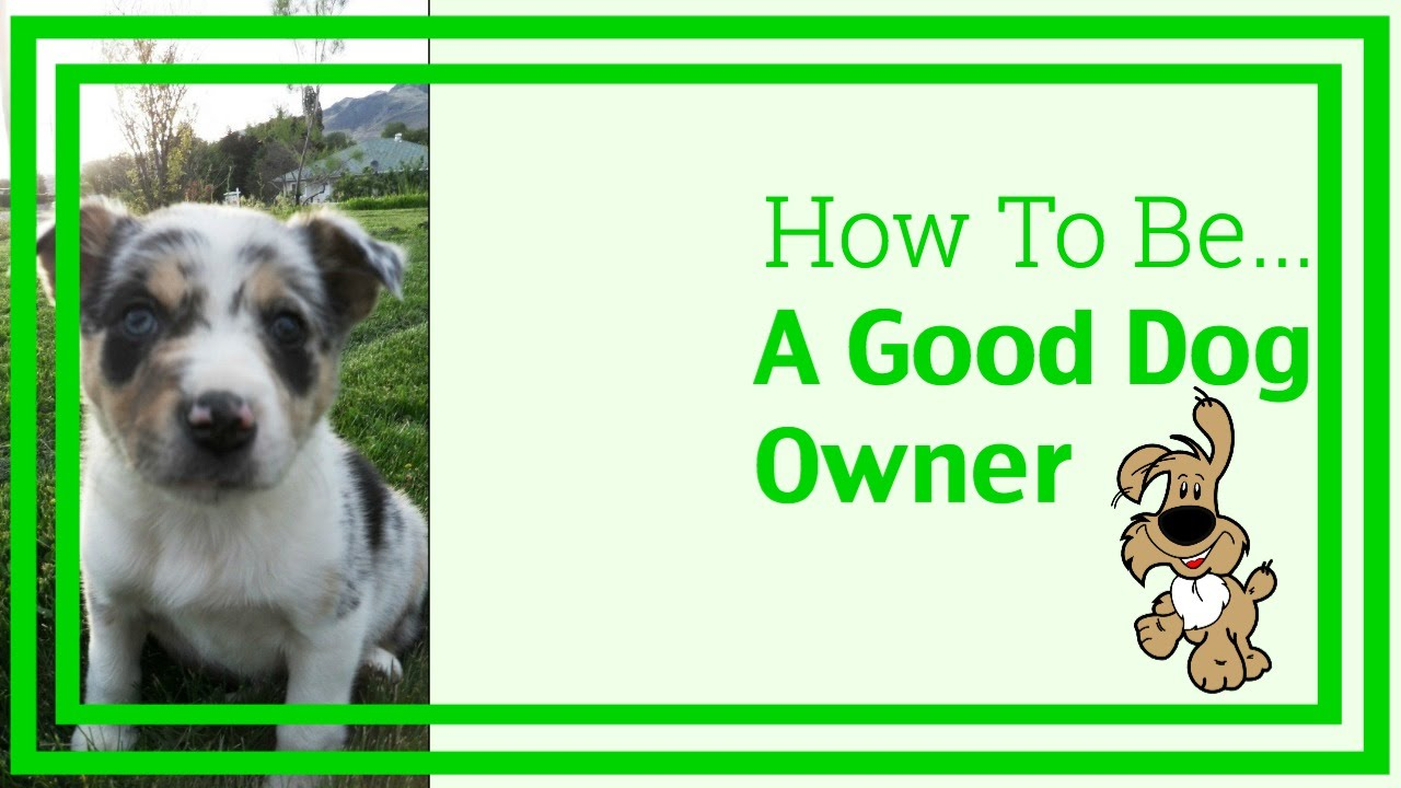 How to Be a Good Dog Owner How to Be a Good Dog Owner new pictures