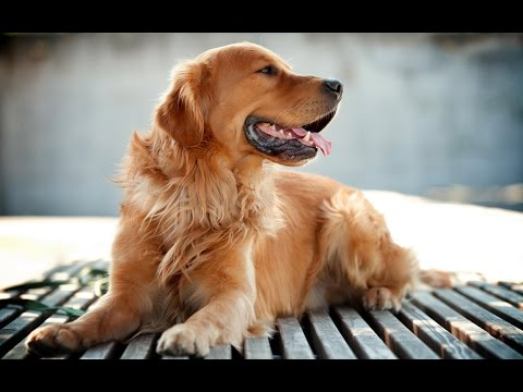The 10 friendliest dogs breeds