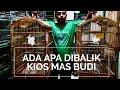 Burung Panca Warna Dan Cucak Cungko Yang Ditunggu Ada Di Pb Pramuka  Mp3 - Mp4 Download