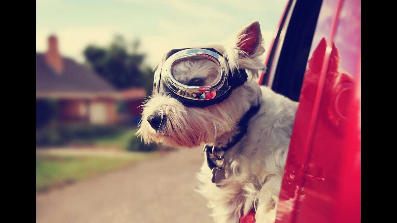All About Baxter & Bella's Online Puppy School