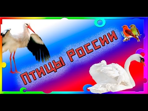 Птицы России