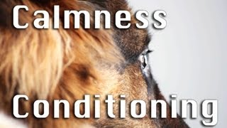 How To Train Calmness in Dogs! (Part I)