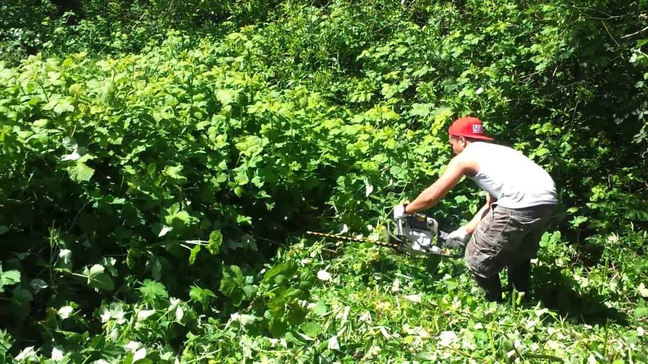 Bush Hedge Trimmer