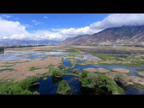 Dan Riskin on how Tibetan plants are fighting climate change