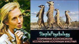 Современная зоопсихология. Исследования кооперации животных.