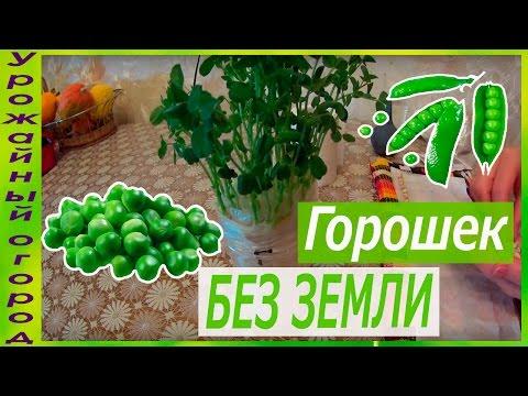 Сорта салатов