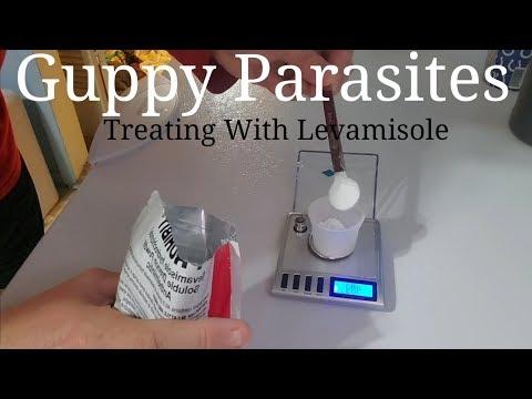 Guppy Parasites - Treating With Levamisole