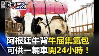 阿根廷牛背著可愛紅包包 一個「牛屁集氣包」可供一輛車開24小時! 關鍵時刻 20170628-3 陳耀寬 黃創夏 劉燦榮
