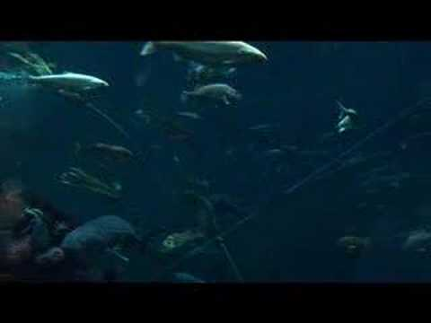 Hippy Gourmet visits the Vancouver Aquarium